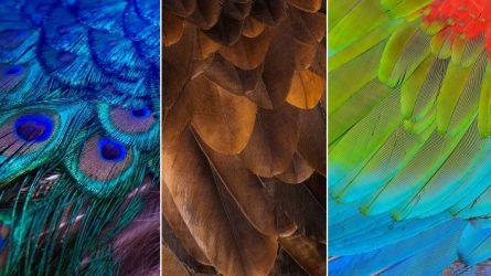 Trắc nghiệm: Chiếc lông vũ bạn chọn tiết lộ điều gì về tính cách của bạn?