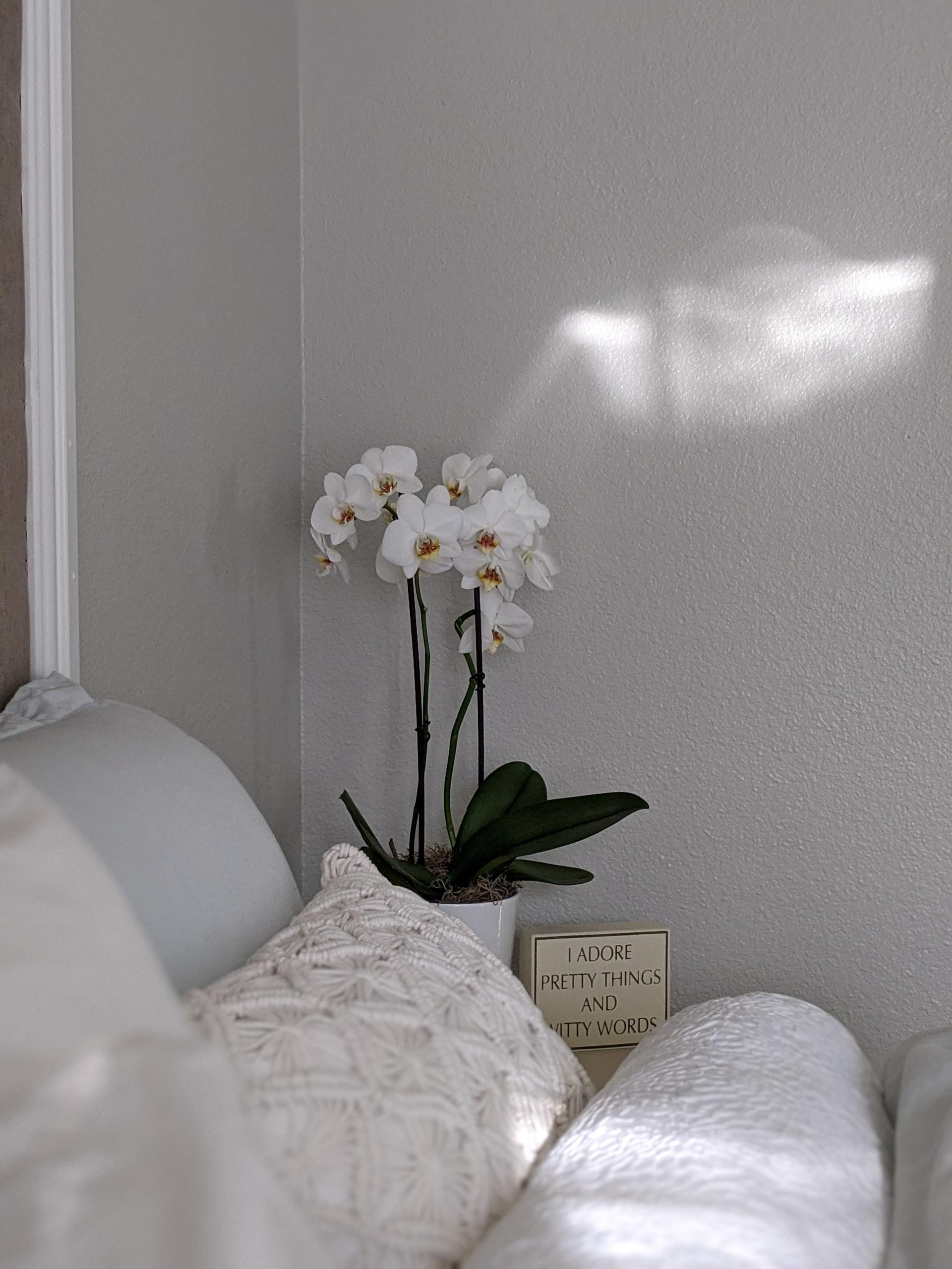 cự giải phù hợp với hoa lan trắng