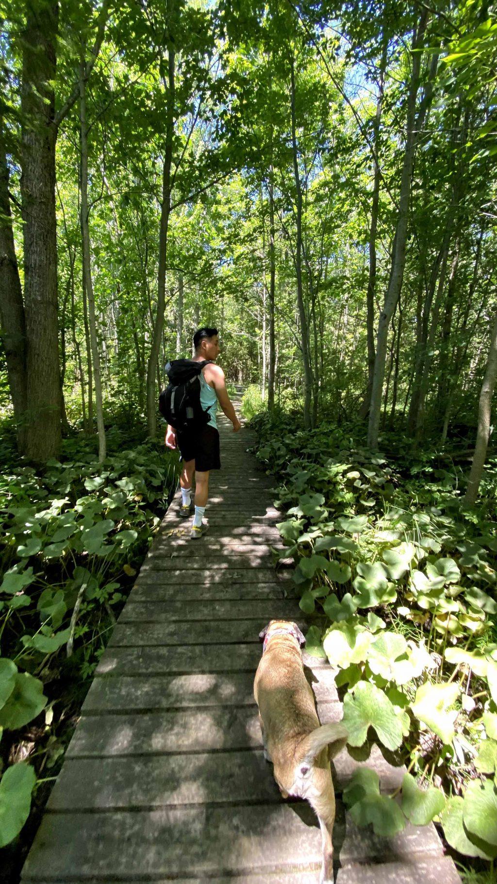 Canada con đường mòn rợp cây